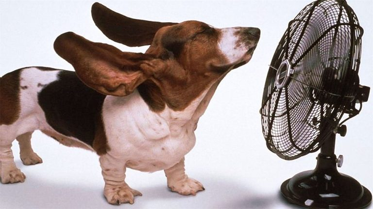 Beagle dog standing by blowing fan. 10 best air conditioning brands. Air Plus Heating & Air Conditioning.