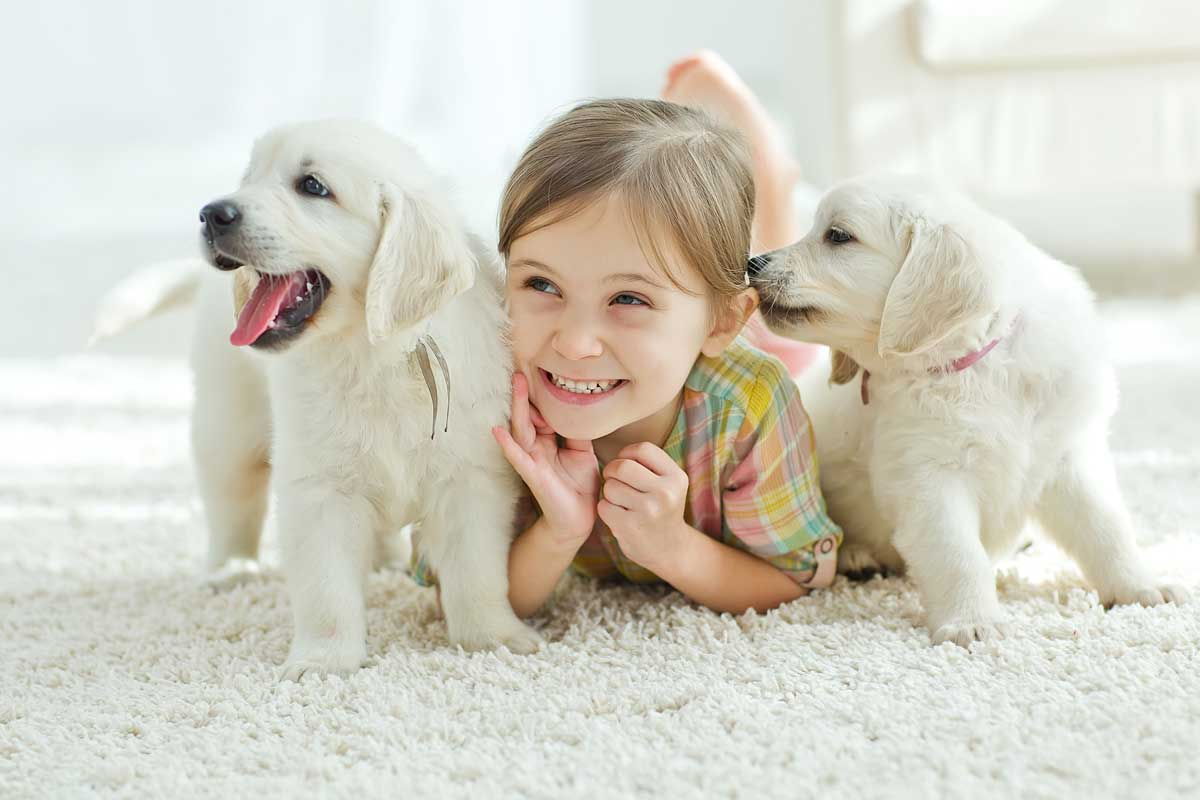 Puppies and Child at Home
